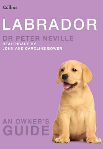 Labrador - Collins Dog Owner's Guide (Paperback)