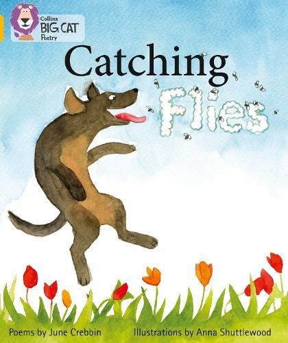 Catching Flies: Band 09/Gold - Collins Big Cat (Paperback)