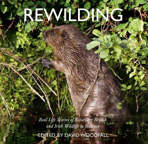 Rewilding: Real Life Stories of Returning British and Irish Wildlife to Balance (Paperback)