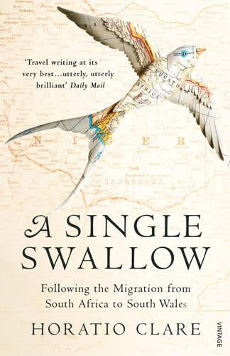 A Single Swallow: Following An Epic Journey From South Africa To South Wales (Paperback)