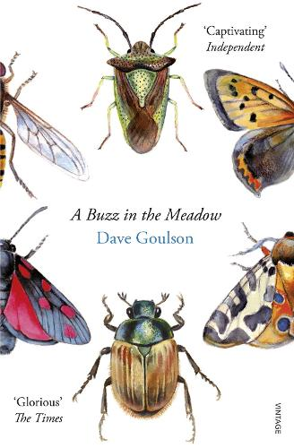 A Buzz in the Meadow (Paperback)