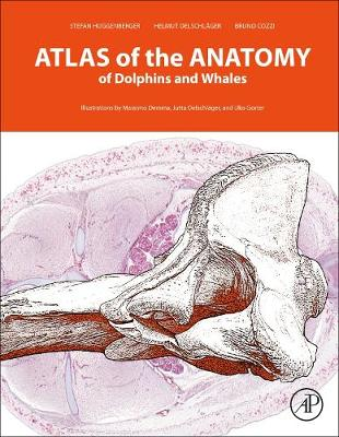 Atlas of the Anatomy of Dolphins and Whales (Hardback)