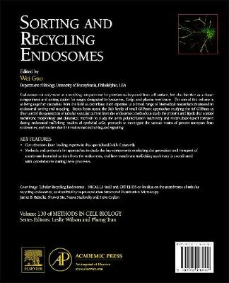 Sorting and Recycling Endosomes: Volume 130 - Methods in Cell Biology (Hardback)