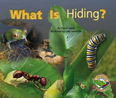 What Is Hiding? (Paperback)