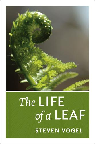 The Life of a Leaf (Paperback)