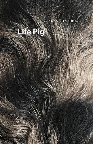 Life Pig - Phoenix Poets (Paperback)
