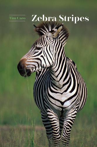 Zebra Stripes (Hardback)