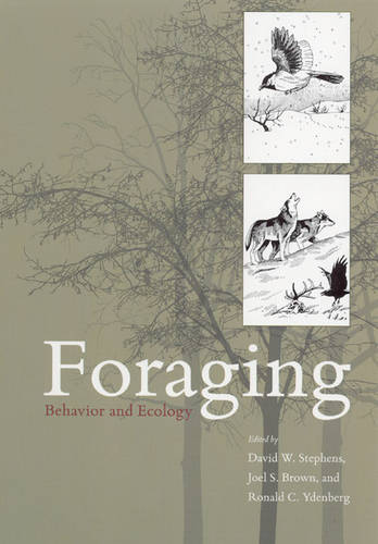 Foraging: Behavior and Ecology (Paperback)