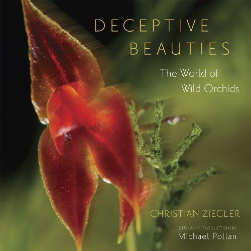 Deceptive Beauties: The World of Wild Orchids (Hardback)