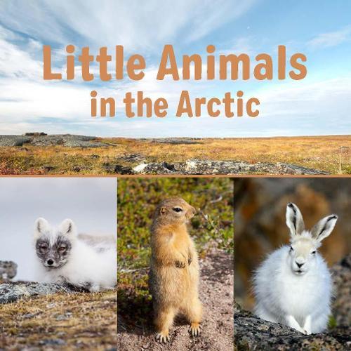 Little Animals in the Arctic (English) - Nunavummi (Paperback)