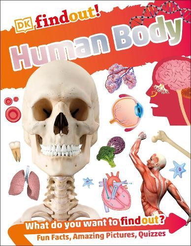 Human Body - DKfindout! (Paperback)