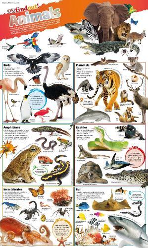 DKfindout! Animals Poster - DKfindout! (Wallchart)