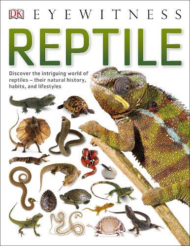 Reptile - Eyewitness (Paperback)