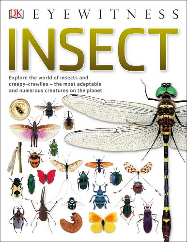 Insect: Explore the world of insects and creepy-crawlies - the most adaptable and numerous creatures on the planet - Eyewitness (Paperback)