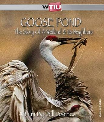 Goose Pond: The Story of a Wetland and its Neighbors (Paperback)