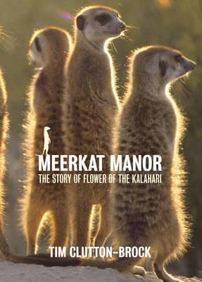 Meerkat Manor: Flower of the Kalahari (Hardback)