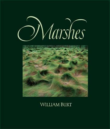Marshes: The Disappearing Edens (Hardback)