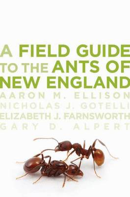 A Field Guide to the Ants of New England (Paperback)