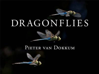 Dragonflies: Magnificent Creatures of Water, Air, and Land (Hardback)