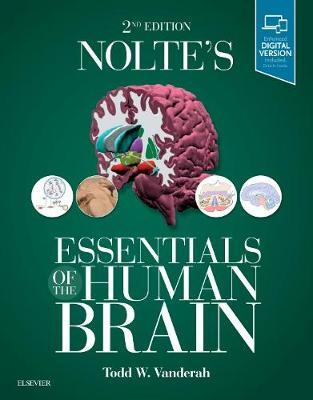 Nolte's Essentials of the Human Brain (Paperback)