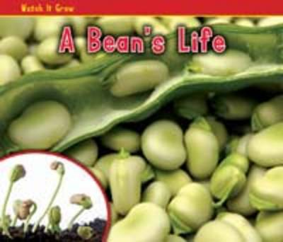 A Bean's Life - Acorn: Watch it Grow (Paperback)