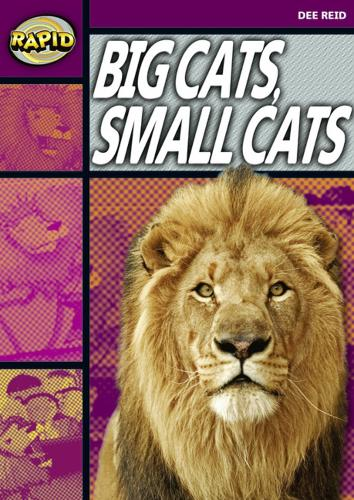 Rapid Stage 1 Set A: Big Cats Small Cats (Series 1) - RAPID SERIES 1 (Paperback)