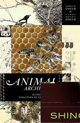 Animal Architects: Building and the Evolution of Intelligence (Paperback)
