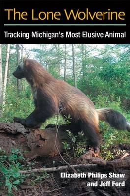The Lone Wolverine: Tracking Michigan's Most Elusive Animal (Paperback)