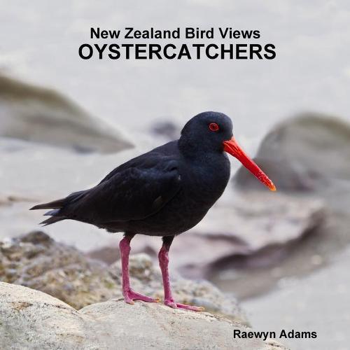 New Zealand Bird Views: Oystercatchers (Paperback)