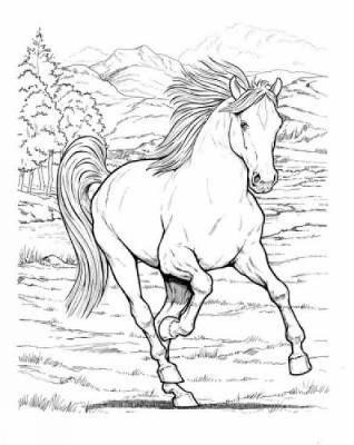 Wonderful World of Horses Coloring Book - Dover Nature Coloring Book (Paperback)