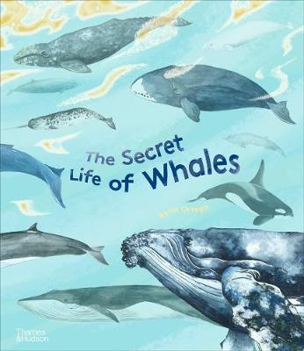 The Secret Life of Whales (Hardback)