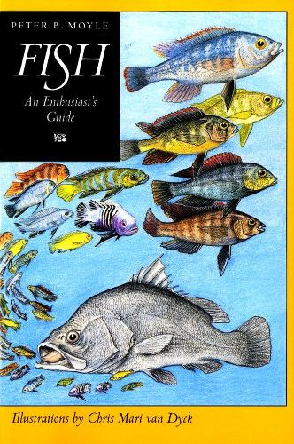 Fish: An Enthusiast's Guide (Paperback)