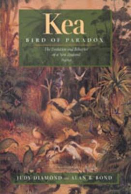 Kea, Bird of Paradox: The Evolution and Behavior of a New Zealand Parrot (Hardback)