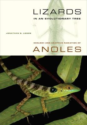 Lizards in an Evolutionary Tree: Ecology and Adaptive Radiation of Anoles - Organisms and Environments 10 (Paperback)