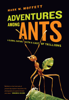 Adventures among Ants: A Global Safari with a Cast of Trillions (Paperback)