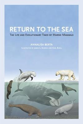 Return to the Sea: The Life and Evolutionary Times of Marine Mammals (Paperback)
