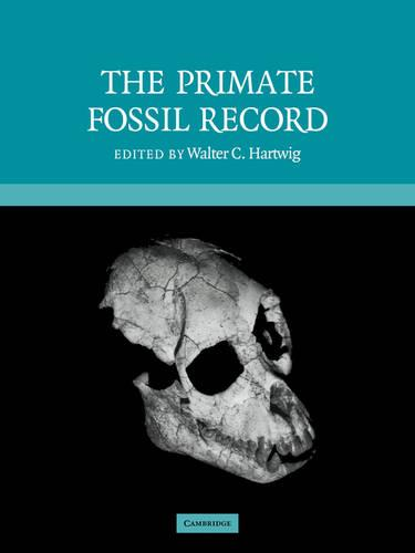 Cambridge Studies in Biological and Evolutionary Anthropology: The Primate Fossil Record Series Number 33 (Paperback)