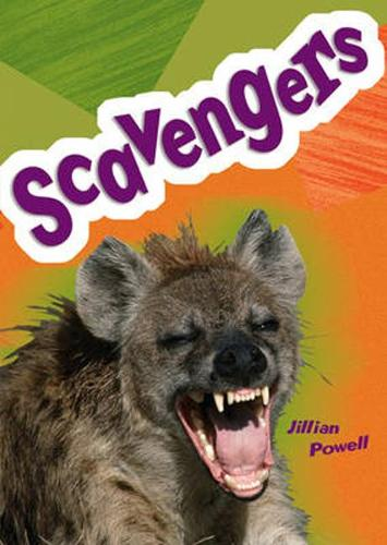 Pocket Facts Year 5: Scavengers - POCKET READERS NONFICTION (Paperback)