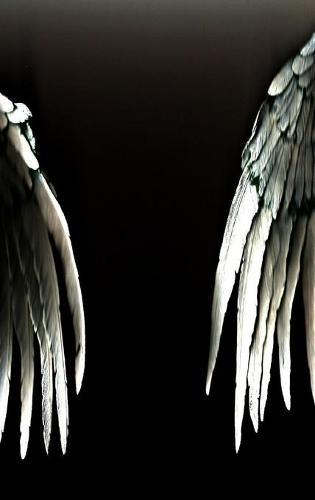 The Angels of Resistance (Hardcover) (Hardback)