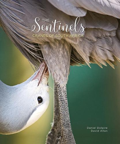The Sentinels: Cranes of South Africa (Hardback)