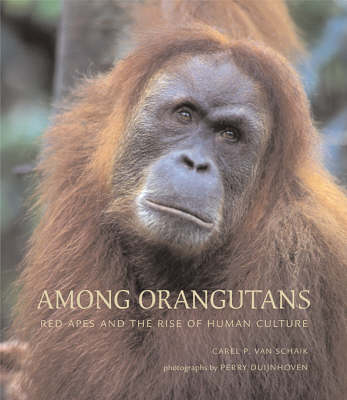 Among Orangutans: Red Apes and the Rise of Human Culture (Hardback)