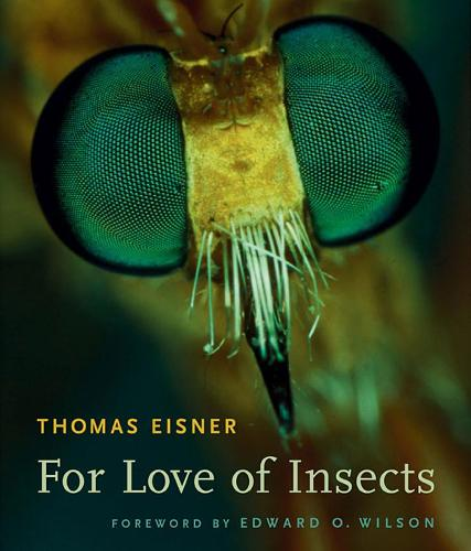 For Love of Insects (Paperback)