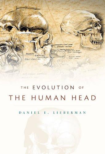 The Evolution of the Human Head (Hardback)