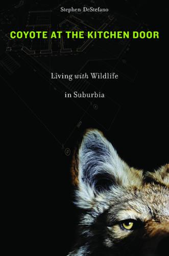 Coyote at the Kitchen Door: Living with Wildlife in Suburbia (Paperback)
