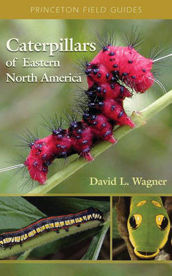 Caterpillars of Eastern North America: A Guide to Identification and Natural History - Princeton Field Guides (Paperback)