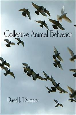 Collective Animal Behavior (Paperback)