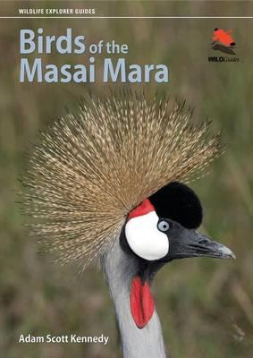 Birds of the Masai Mara - Wildlife Explorer Guides (Paperback)