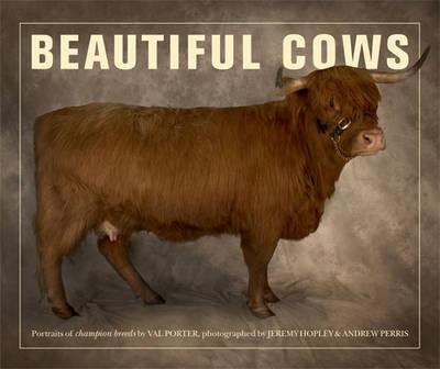 Beautiful Cows (Paperback)