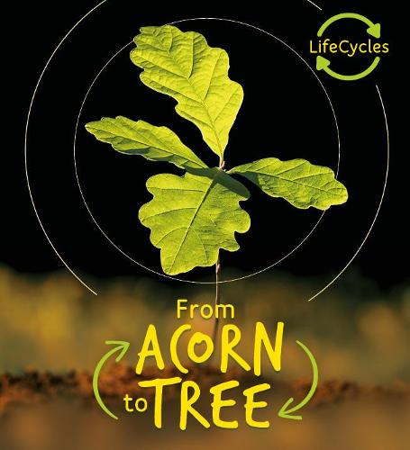 Lifecycles - Acorn to Tree - Life Cycles (Paperback)
