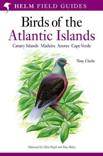 A Field Guide to the Birds of the Atlantic Islands: Canary Islands, Madeira, Azores, Cape Verde - Helm Field Guides (Paperback)